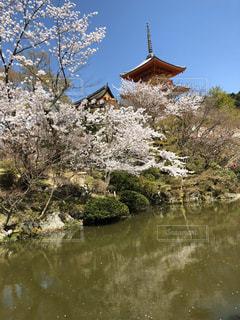 自然,風景,空,花,春,桜,清水寺,木,京都,水面,花見,景色,お花見,旅行,イベント,草木,さくら