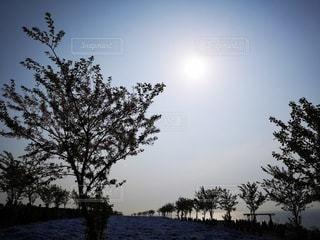 自然,空,太陽,光,樹木,日中