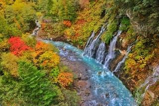 自然,風景,空,秋,紅葉,太陽,カラフル,青,川,水面,水色,北海道,景色,滝,光,樹木,富良野,青い池,草木,美瑛,大雪山