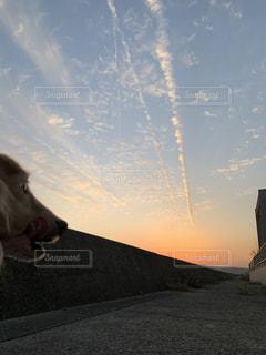 犬,空,動物,太陽,夕焼け,光,飛行機雲,夕陽