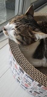 猫,動物,にゃんこ,屋内,ペット,箱,お昼寝,日向ぼっこ,ネコ,ウトウト