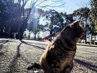 猫,公園,動物,屋外,樹木,ペット,人物,野良猫,地面,地域猫,ネコ,ノラ,サクラネコ,住んでいる