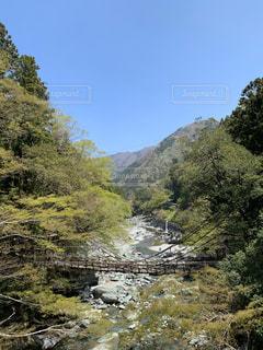 自然,空,森林,太陽,川,景色,光,徳島,かずら橋,祖谷