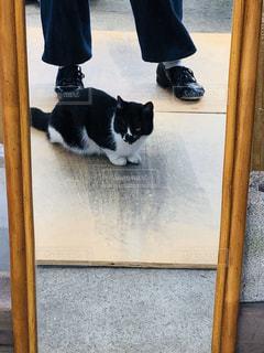猫,動物,庭,鏡,ペット,人物,練習,地域猫,外猫,ネコ,タップダンス