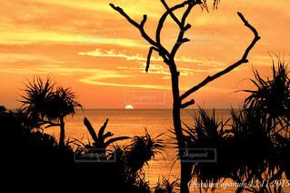 海,空,太陽,南国,夕暮れ,沖縄,光,アダンの木