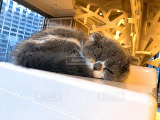 お昼寝中の猫ちゃんの写真・画像素材[2947297]