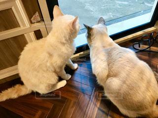 猫,動物,屋内,窓,ペット,床,子猫,人物,ネコ,猫の日,222
