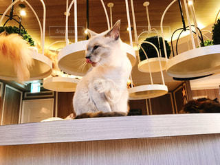 テーブルの上綺麗好きな猫ちゃんの写真・画像素材[2947298]