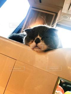 猫,動物,屋内,ペット,子猫,人物,お昼寝,うとうと,ネコ,半目,おひるね,猫の日,222