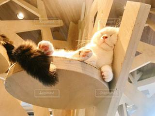 お昼寝中の猫ちゃんの写真・画像素材[2947300]