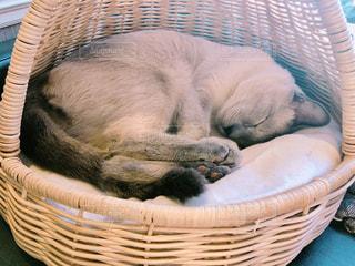 かごの中で眠っている猫ちゃんの写真・画像素材[2947306]