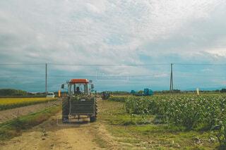 とうもろこしをトラクターで運ぶおじいちゃんの写真・画像素材[4790574]