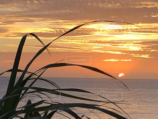 自然,海,空,太陽,夕暮れ,景色,光,草木