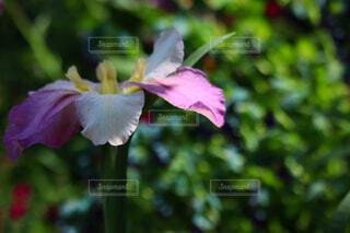 美しい貴方への写真・画像素材[4416483]