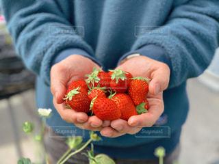 果物を持つ手の写真・画像素材[2896201]