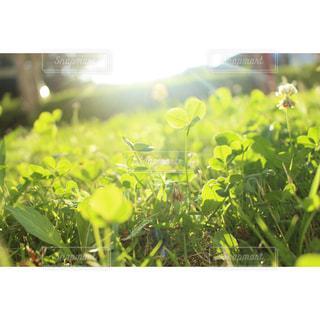 男性,子ども,家族,恋人,友だち,1人,2人,3人,自然,空,花,太陽,光,草,草木