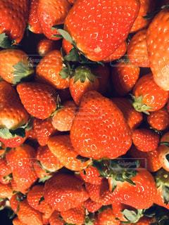 女性,家族,恋人,食べ物,赤,苺,果物,野菜,たくさん,ストロベリー,イチゴ