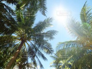 ヤシの木と太陽の写真・画像素材[2895010]