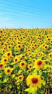 花のクローズアップの写真・画像素材[4663529]