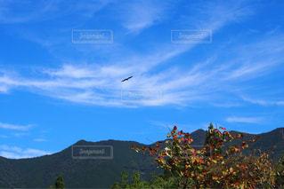 自然,空,鳥,木,雲,晴天,山,日中