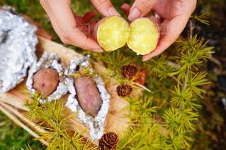 手作り芋で焼き芋の写真・画像素材[2895906]