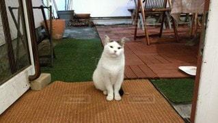 猫,動物,白,かわいい,ペット,床,人物,座る,可愛い,ネコ