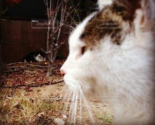 猫,動物,白,ペット,人物,地面,ネコ