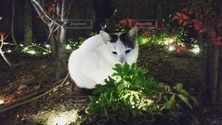 猫,動物,屋外,白,黒,樹木,ペット,人物,草木,ネコ