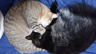 猫,動物,屋内,黒,ペット,子猫,人物,ネコ,ネコ科の動物