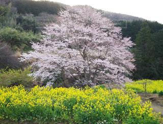 野原の黄色い花の写真・画像素材[3041608]