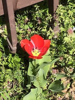 花園のクローズアップの写真・画像素材[3076137]