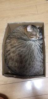 木のテーブルの上に座っている猫の写真・画像素材[3363389]