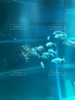 水の下で泳ぐ魚の写真・画像素材[4732828]