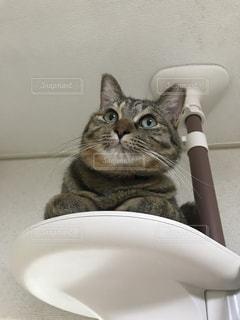 猫,動物,ペット,人物,キャットタワー,ネコ,登っている猫