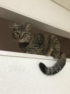 猫,動物,ペット,人物,壁,ネコ,壁に登る猫