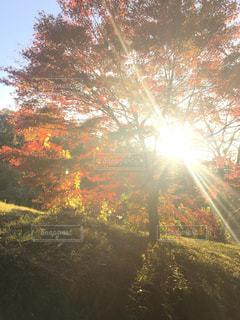 光を浴びる木の写真・画像素材[2904356]