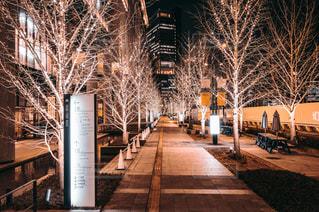 屋外,樹木,都会,歩道,グランフロント大阪,うめきた広場
