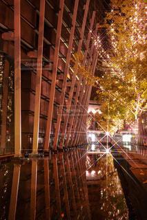 建物,夜,屋外,樹木,イルミネーション,クリスマス,装飾,グランフロント,飾り,クリスマス ツリー,Grand Wish Christmas 2020