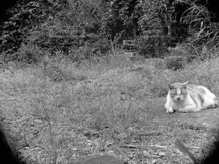 眠る猫の写真・画像素材[2906689]