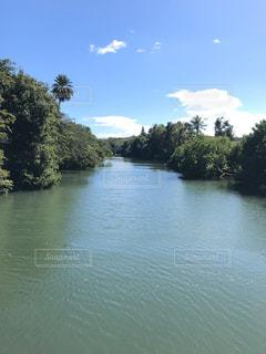 木に囲まれた川の写真・画像素材[2906733]