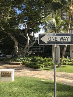 木の前の道路標識の写真・画像素材[2906736]