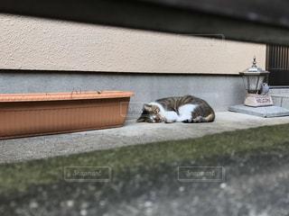 家に入らない猫の写真・画像素材[2906698]