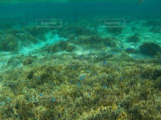サンゴの水中ビューの写真・画像素材[2906697]