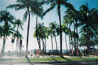 ワイキキビーチの写真・画像素材[2906710]