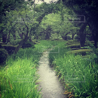 森の中の緑の植物の写真・画像素材[1038994]