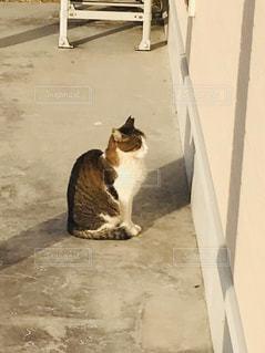 猫,動物,座る,猫背,ネコ