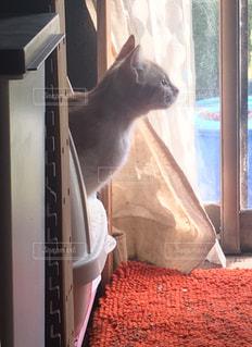 猫,動物,窓,ペット,癒し,トイレ,見つめる,爽快,ネコ