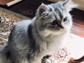 猫,動物,屋内,アンティーク,ペット,人物,癒し,ネコ,もふもふ
