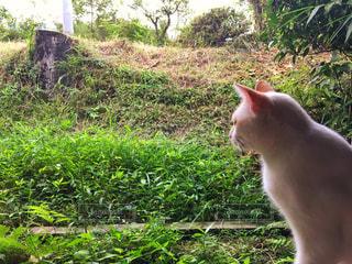 猫,動物,縁側,ペット,人物,1匹,佇む,草木,ネコ