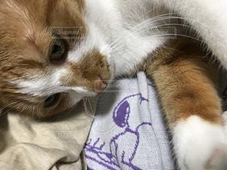 猫,動物,ペット,人物,茶トラ猫,ネコ